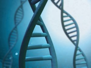 DNA Linked to Longer Life?