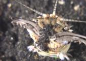 Bobbit Worm: The Stuff of Nightmares