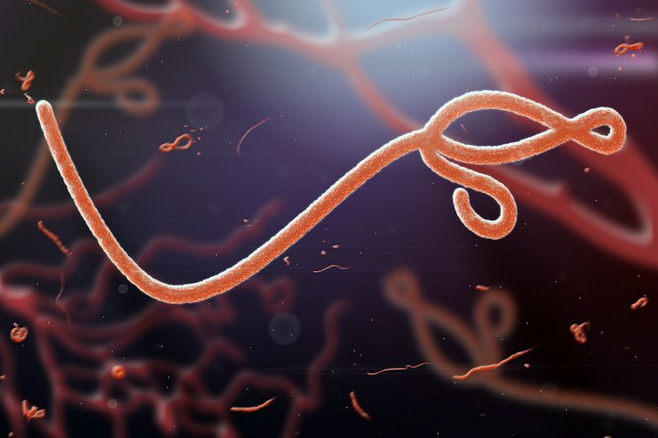 A Microscopic view of the Ebola virus